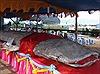 Bộ da cá nhám voi đạt kỷ lục Guiness Việt Nam