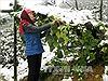 Tuyết đã tan tại Sa Pa, hoa màu gia súc không thiệt hại