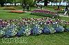 Rực rỡ Lễ hội hoa Tulip Morges 2015