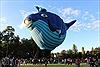 Rộn ràng lễ hội khinh khí cầu Canberra