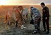 Tổng thống Putin về vùng quê chăm sóc ngựa hoang