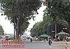 Đốn hạ 123 cây xanh giải quyết ùn tắc giao thông khu vực sân bay Tân Sơn Nhất