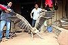 Chim lạ xuất hiện bên hồ sông Đà