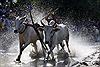 Tưng bừng lễ hội đua bò Bảy Núi năm 2012