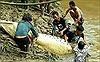 Phát hiện chân tay người trong bụng cá sấu khổng lồ tại Indonesia