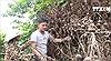 Hàng trăm cây nhãn bị phá hoại khi gần đến ngày thu hoạch