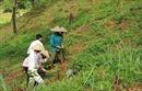 Cộng đồng bảo vệ và phát triển rừng