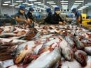 Thuế chống bán phá giá tăng mạnh, cá tra có hết đường vào thị trường Mỹ?