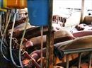 Phát hiện lò mổ bơm nước, tiêm thuốc an thần cho lợn trước khi giết
