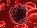 Phát triển công nghệ nano tìm diệt tế bào ung thư