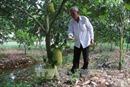Giá mít Thái siêu sớm cao kỷ lục, trộm trái cây 'lộng hành' ở Tiền Giang