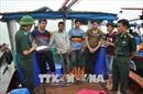 Quảng Ninh bắt giữ 5 tàu khai thác thủy sản trái phép