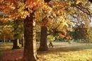 Quyến rũ mùa thu Canberra