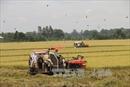 Khai thông cho thị trường quyền sử dụng đất nông nghiệp