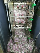 Chuột lẻn vào máy ATM cắn nát hơn 17 nghìn USD