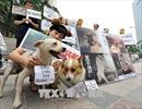 Tòa án Hàn Quốc cấm giết chó để ăn thịt