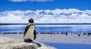 Nhiệt độ nước biển tăng với tần suất và cường độ cao hơn