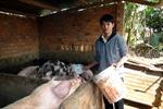 Thanh niên vùng sâu Đắk Lắk vươn lên làm giàu