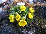 Bắc Cực sẽ bùng nổ thảm thực vật