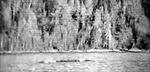 """Những con """"thủy quái"""" lừng danh thế giới - Kỳ 1: Quái vật hồ Kanasi"""