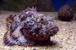 Cấp cứu ngư dân bị nhiễm độc cá mặt quỷ