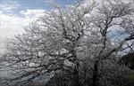 Nhiệt độ Sa Pa xuống mức rét hại