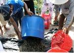 Kiểm soát chất lượng tôm xuất khẩu