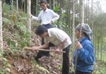 Đẩy mạnh phát triển kinh tế rừng