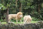Ngắm vườn thú đêm ở Đảo quốc Sư tử
