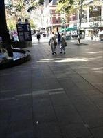 'Sư lạ' tái xuất trên đường phố Sydney