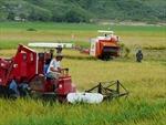Hỗ trợ lãi suất nhằm giảm tổn thất trong nông nghiệp