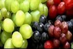 Hàng trăm tấn hoa quả Trung Quốc nhiễm độc tuồn sang Việt Nam