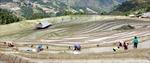 Vẻ đẹp ruộng bậc thang Hoàng Su Phì mùa đổ nước