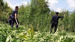 Albania tấn công 'Thủ phủ ma túy châu Âu'