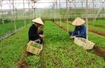 Ban Chỉ đạo Tây Nguyên làm việc với lãnh đạo tỉnh Lâm Đồng