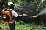 Dịch sốt Chikungunya tiếp tục lan rộng tại Trung Mỹ