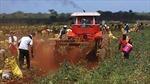 Việt Nam-Cuba thúc đẩy kinh tế-thương mại song phương
