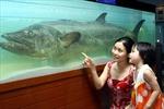 Hội nhập quốc tế của ngành hải dương học Việt Nam-Bài 1