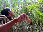 Lâm  tặc chặt ươi, phá rừng