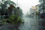 Bão số 2 quật đổ cây ở Quảng Ninh