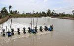 Ninh Thuận khánh thành nhà máy chế biến tôm xuất khẩu