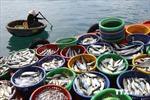 Nuôi hải sản trên biển đang là lợi thế