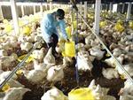 Tăng cường phòng, chống cúm A(H5N6)
