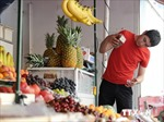EU hỗ trợ các nhà sản xuất nông nghiệp bị cấm xuất khẩu sang Nga