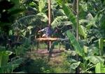 Nghiêm cấm chở khách qua sông bằng cáp treo tại Hà Nội