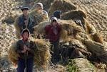 Triều Tiên tăng mạnh nhập khẩu gạo từ Trung Quốc