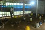 Tạo liên kết chuỗi trong chăn nuôi