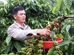 Cà phê Đắk Lắk đã có mặt ở 80 nước, vùng lãnh thổ