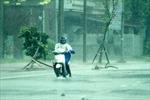 Quảng Ninh–Thanh Hóa chịu ảnh hưởng bão nhiều nhất
