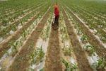 Cơn sốt mua đất nông nghiệp nước ngoài của các nước Arập